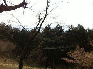 高尾山口から稲荷山コースで陣馬山へトレイルラン